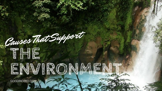 Causes That Support The Environment