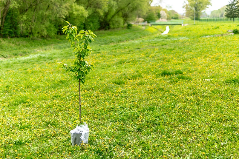 Good Deeds for Teens to Do During Summer A Tree in a Field Waiting to be Planted