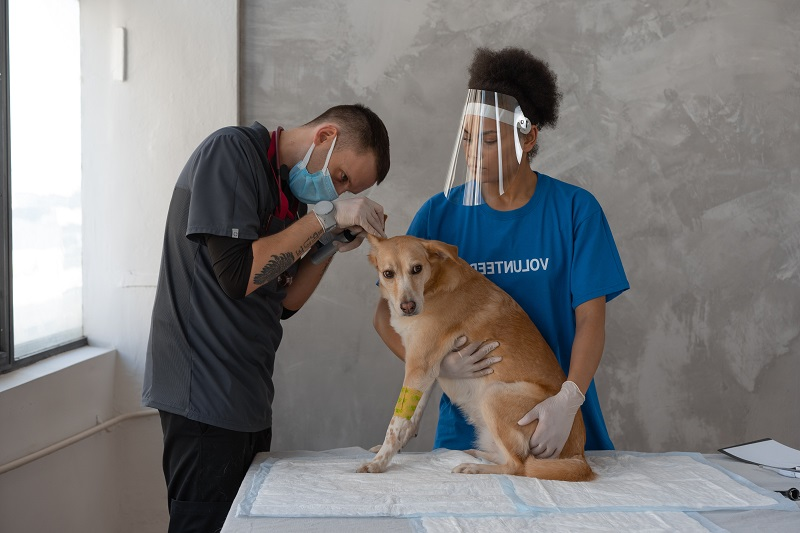 How Does Volunteering Make Someone a Better Leader A Male Vet with a Female Volunteer Helping Him with a Dog